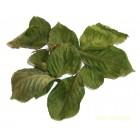 Вишневый лист