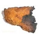 Чага (берёзовый гриб)