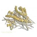 Лимонник крымский (татар чай)