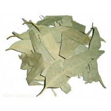 сушёный лист эвкалипта